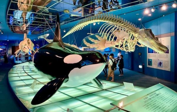 Killer whale exhibits
