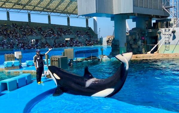 killer whale trainings